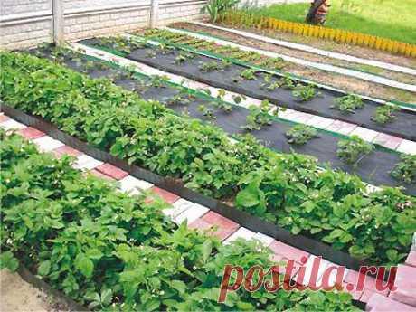 Маленькие секретики (садовод-садоводу) 1. Йод для капустыВ ведро воды добавить 40 капель йода. Когда начнет формироваться кочан, поливать капусту под растение по 1 литру.2. Ускорение проростаЧтобы семена быстрее проросли их замачивают в ра…