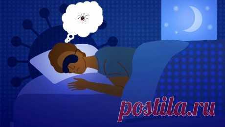 Узнайте, к чему снится Паук ? Прочитайте толкования этого сна на странице  сонника Старого мудреца и планируйте свое будущее !