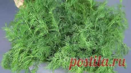 Зелень остается СВЕЖЕЙ до 2-х месяцев! Рецепты из укропа УКРОПНАЯ ЗАВИСИМОС