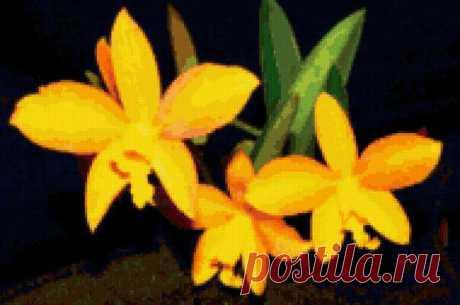Предпросмотр - Схема вышивки «Желтые цветы» - Автор «Luda49» - Авторы - Вышивка крестом