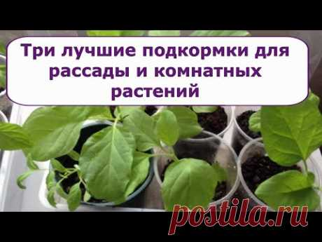 541. Три лучшие подкормки для рассады и комнатных растений