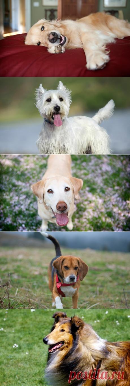 Лучшие собаки-компаньоны: 10 прекрасных семейных пород | PetTips
