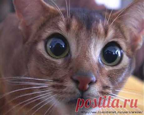 El medio eficaz de las marcas de los gatos.