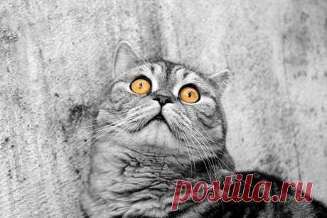 Шокированные животные в фотографиях