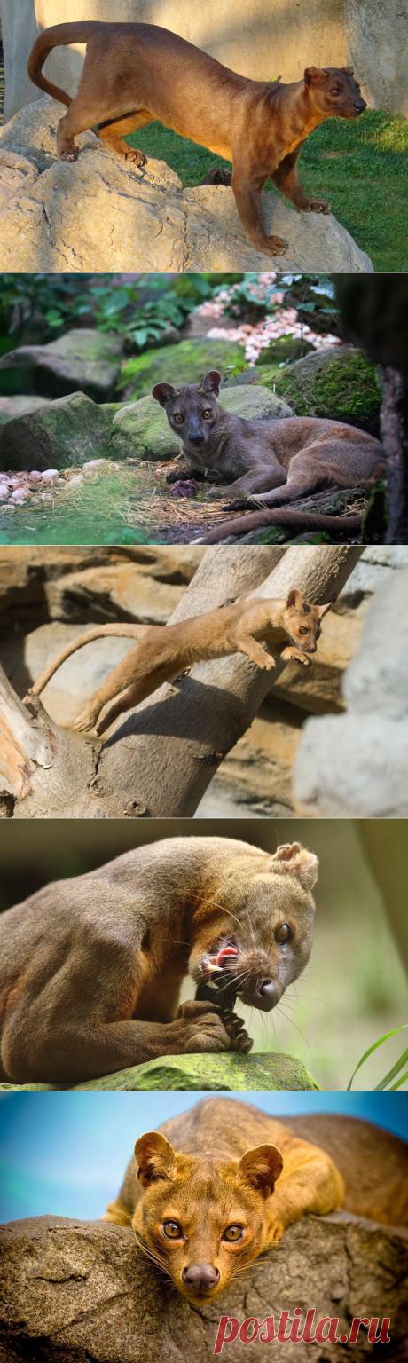 Самые необычные животные в мире (часть 41)