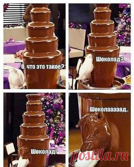 я понимаю этого попугая)