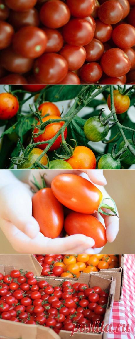 Как долго сохранить помидоры свежими: без холодильника, зимой