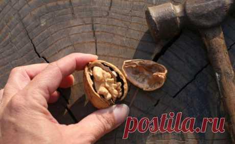 Сохраняйте перегородки грецких орехов — это целебное лекарство от многих болезней
