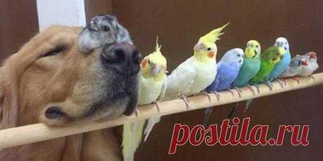 Замечательные животные, которые поднимут вам настроение
