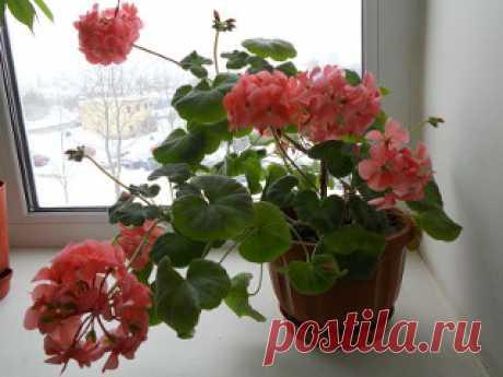 Лечебные домашние растения — dibbe.ru