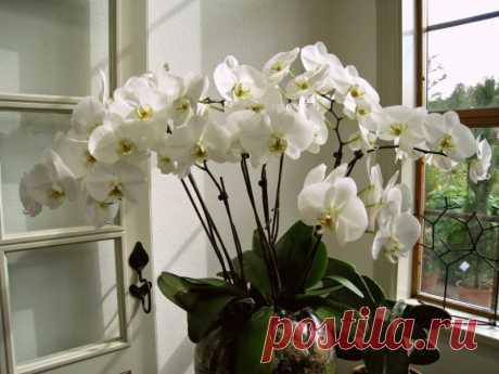 Места, не подходящие для роста орхидеи Места в доме, которые не подходят для содержания орхидеи и могут ее погубить.