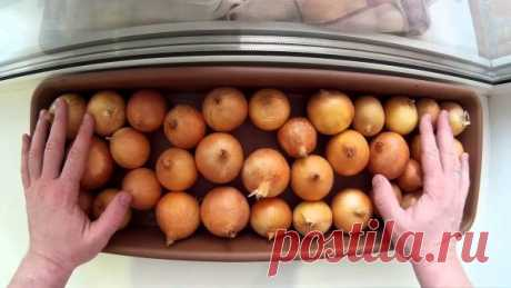 As correctly presoak onions of sevka before landing