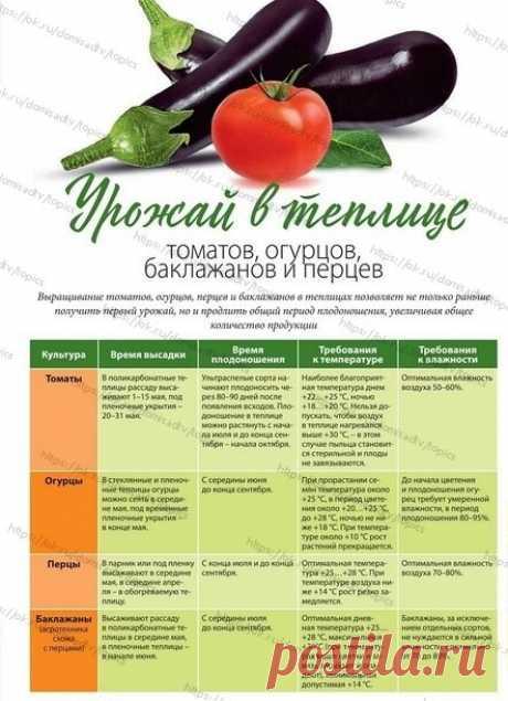 ОГОРОД  Овощи в теплице