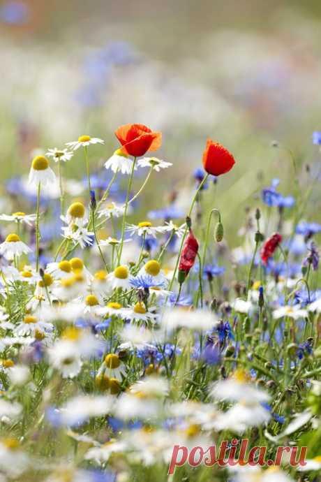 (11) Наш мир - удивительный , и красивый, весёлый и мудрый. ...Под теплом голубого простора,с влагой сытой небесной воды.Алым цветом раскрашены маки,василек бирюзою одет,И веселый степной колокольчик ветру шепчет там что-то в ответ. Голова белокурой ромашки, к солнцу вытянув гордо свой диск,сердцевину окрасила краской и зарделась,исполнив каприз.Словно конкурс цветы объявили-так кого королевой назвать! И собралась на поле с ковылем разноцветная,гордая рать!Не понять,кто ко...