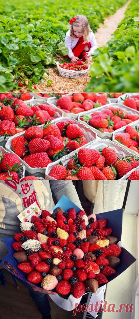 Откажись от такой клубники, если заметишь на ягодах ЭТО! Обезопась себя и близких. — Полезные советы