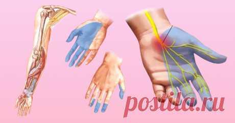 Почему немеют руки: 7 причин, заставляющих задуматься о здоровье.  Каждому человеку не раз приходилось сталкиваться с ощущением потери чувствительности ноги или руки, сопровождающимся легким покалыванием или жжением. Зачастую это происходит из-за временного нарушени…