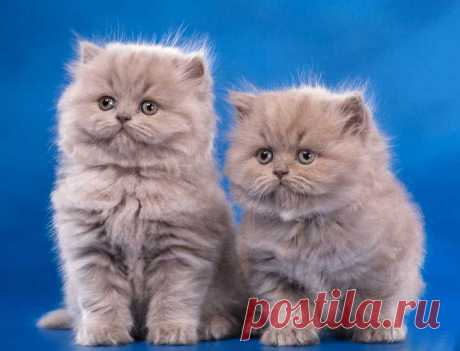 Самый «пушистый» праздник — Всемирный день кошек