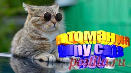 Любите смотреть приколы про кошек? Тогда мы уверены, Вам понравится наше видео 😍. На котомании Вас ждут: видео смешной кот, смешное про животных, приколы о кошках, смешное видео кошка, видео с кошками, приколы о котах, видео кошка смешная, про видео смешное кошку, смешное видео, приколы смешное видео, прикол видео кошки, видео приколы смотреть бесплатно. #смешныекоты, #котомания, #видеосмешные, #кошачьиприколы, #юморкотики, #funny_cats, #забавныекотики, #catloversclub, #ilovecat.