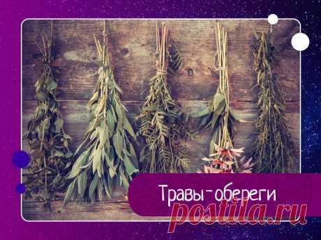 Магия трав и деревьев известна людям из далекого прошлого. Травы-обереги известны как сильные оберег — Эзотерика, психология, философия
