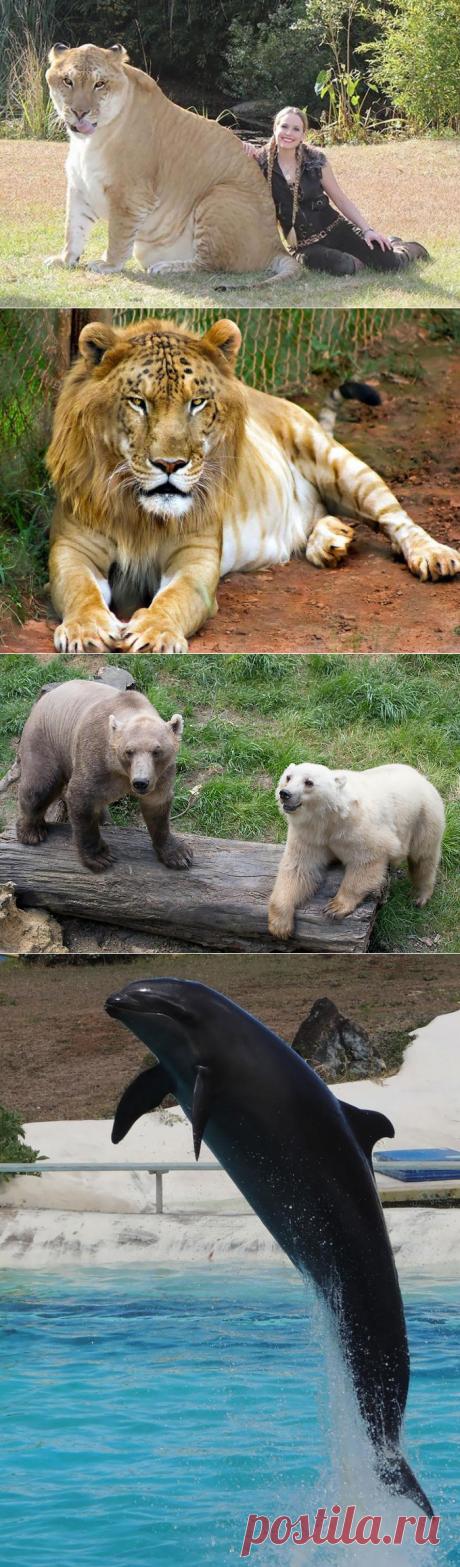 18 гибридов животных которых вы никогда не видели
