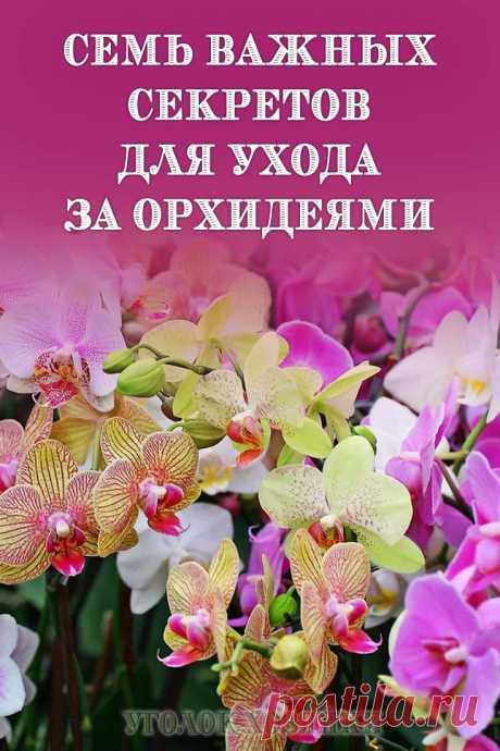 Увлечение орхидеями по праву называют совершенно особенной сферой цветоводства. Эти удивительные растения настолько уникальны и по форме роста, и по типу корневища, и по требованиям к условиям, что причислять их к обычным цветущим культурам было бы настоящим преступлением.