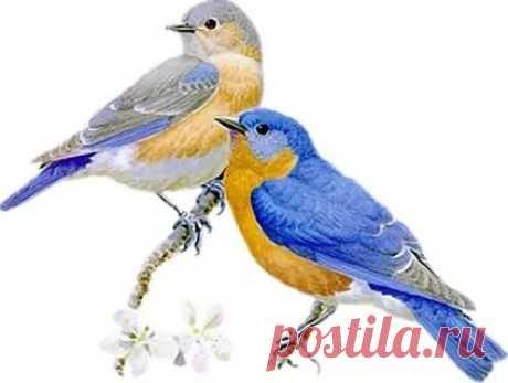 птицы в PNG