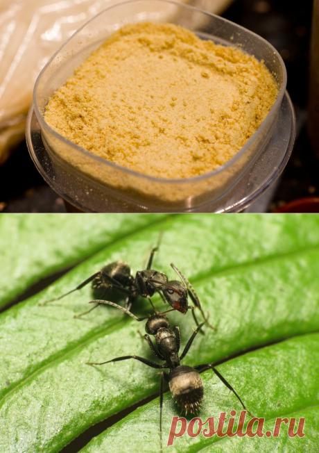 Горчица в огороде: применение от вредителей, порошок, настой, опрыскивание