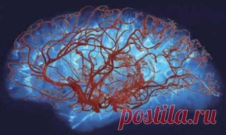 Как улучшить мозговое кровообращение: причины нарушения кровотока Множество функций внутренних органов и систем регулируется нашим мозгом. Поэтому так важно, чтобы мозг был защищен не только от инфекций, но и хорошо снабжался кровью, обогащаясь кислородом.
