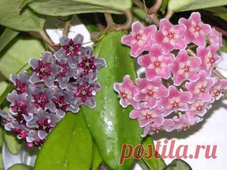 Комнатные цветы цветущие круглый год. Выпуск 4