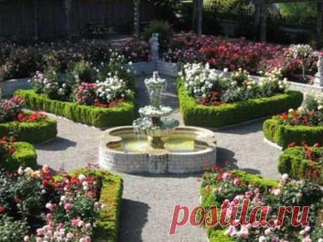 Розы в вашем саду: как организовать розарий в саду и как за ним ухаживать, что посадить с розами на клумбе