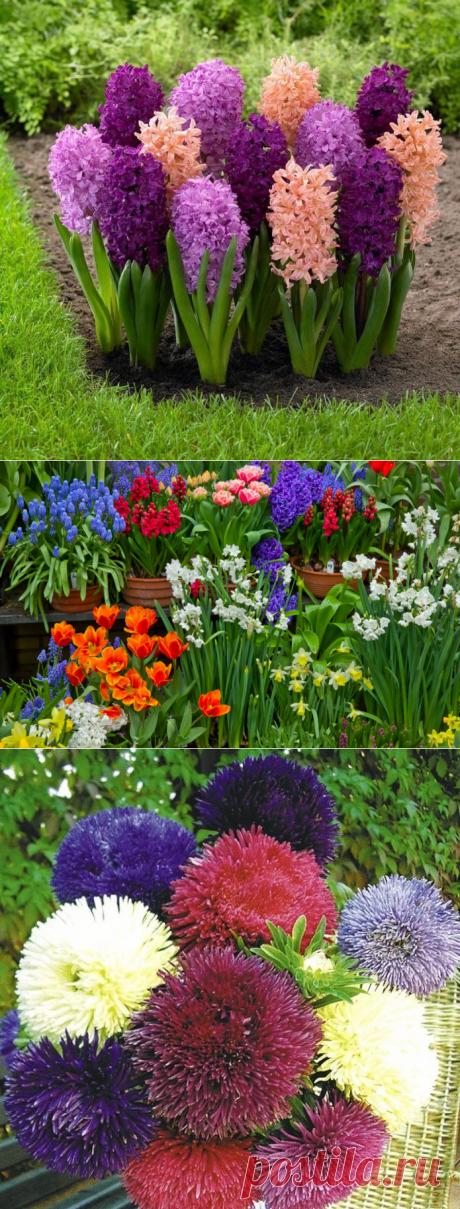 Какие цветы можно посадить под зиму, в том числе семенами