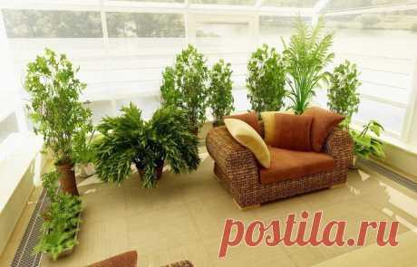 Чем подкармливать комнатные растения? - МирТесен