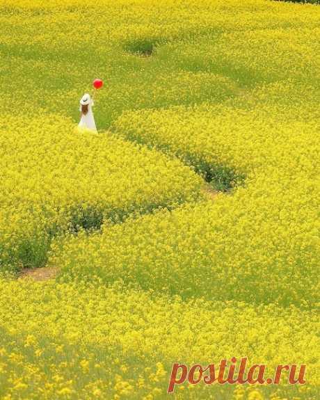 Цветочное поле. Фукусима