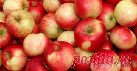 Подкормка яблонь весной, летом и осенью Правильная и своевременная подкормка яблонь – залог хорошего урожая и здоровья деревьев. От того, насколько грунт под растениями будет насыщен питательными элементами, во многом зависит качество плодо...