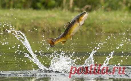 Почему рыба плещется, но не клюет?