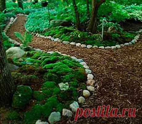 Как создать на даче маленький садик мхов — 6 соток