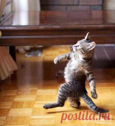 Плейкаст «А я иду такая вся в Дольче & Габбана...Всем хорошего настроения!!!…»