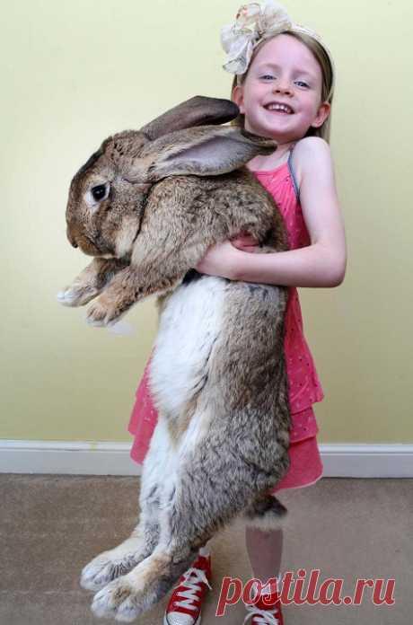 Кролики-великаны: милые и ОГРОМНЫЕ