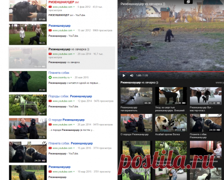 Rizenshnautser vs el perro ganadero)) — el Yandex. El vídeo
