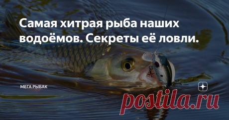 Самая хитрая рыба наших водоёмов. Секреты её ловли. 👋🎣 Опытный рыбак рассказал, какая рыба самая хитрая! 🐟