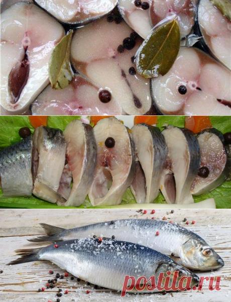 Как солить селедку в домашних условиях: вкусные рецепты засолки рыбы, видео