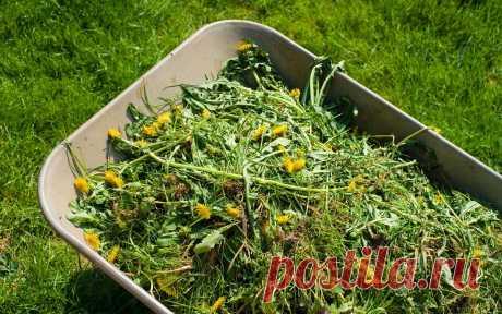 Как использовать сорняки после прополки