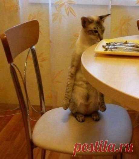 Лапками не трогать)