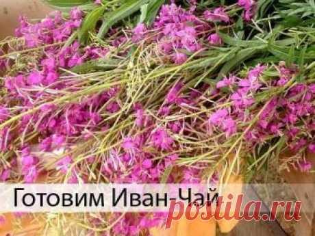 САМОЕ ВРЕМЯ ЗАГОТАВЛИВАТЬ ИВАН-ЧАЙ  Как приготовить Иван-чай?   Хочу поделиться рецептом приготовления вкуснейшего и очень полезного чая из кипрея, или, как его называют, иван-чая. Это растение хорошо вам знакомо, так как растет везде, даже рядом с моим домом в Москве. Ивай-чай является единственным во всех смыслах естественным чаем!   Но сначала немного истории.   Иван-чай — известен на Руси более десяти веков. Этот напиток упоминается в древних русских рукописях, его пил...