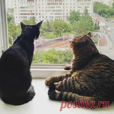 Блинчик и Макс, оконные коты