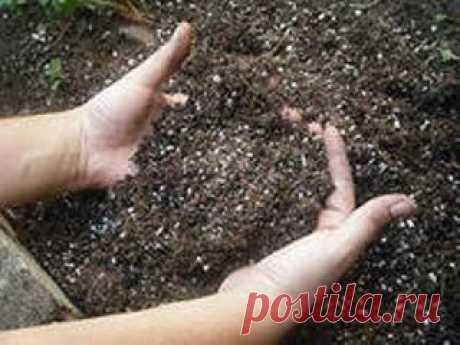 СОВЕТЫ ДАЧНИКАМ И ОГОРОДНИКАМ Сохраните, чтобы не потерять! Севооборот 1-й год — капуста, брюква, редька, редис; 2-й год — тыква, огурцы, кабачки; 3-й год — свекла, морковь, петрушка, лук, чеснок; 4-й год — помидоры, перец, баклажаны, бобовые, кукуруза.  Овощи-предшественники для капусты — картофель, огурцы, лук, горох, допустимы и томаты; для помидоров, перца — огурцы, лук, бобовые, допустима капуста; для огурцов — горох, бобовые, картофель, помидоры; для лука — картофель, помидоры, горох, ог
