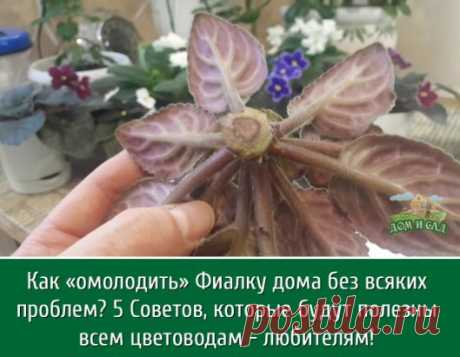 Фиалка - очень красивое растение, которое требует своевременного ухода и омоложение. После нескольких лет роста фиалка начинает стареть, ствол становится некрасивым и кривым, а цветоносы уже не радуют таким ярким и пышным цветением. Именно поэтому я столкнулась с проблемой омоложения фиалок в домашних условиях, так как покупать готовые растения очень дорого. Исходя из личного опыта, могу посоветовать несколько вариантов омоложения фиалок, которые дают хорошие результаты. Самым простым является