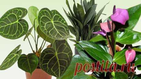 О чём мечтает цветочный шопоголик: топ-10 растений, которые я хочу приобрести | Цветы у Натали | Яндекс Дзен