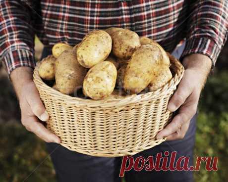 7 секретов огромного урожая картошки