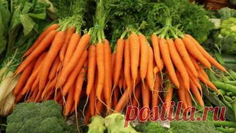 Необычный но эффективный способ посева моркови